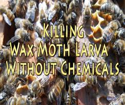 honey bees wax moths natural treatment youtube