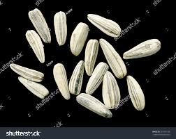 sunflower seeds white not black background stock photo 251991106