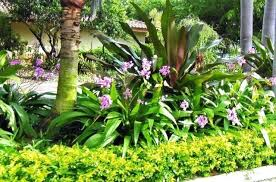 tropical landscaping ideas tropical front garden ideas australia