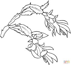 frowers coloring pages coloring7 com