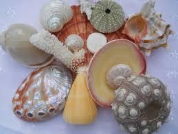 Assorted Seashells 20 Best Seashell Ideas Images On Pinterest Seashell Crafts