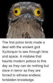 Potoo Bird Meme - god and god meme on me me