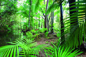 biomes tropical rainforest on emaze