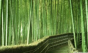 photo collection bamboo forest wallpaper hd