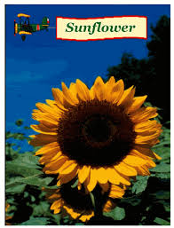 sunflower seed packets seed packet