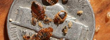 What Causes Bed Bugs To Come Out What Are Bed Bugs Bon Voyage Bed Bugs