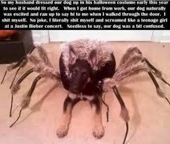 Halloween Meme Funny - funny halloween animal costume