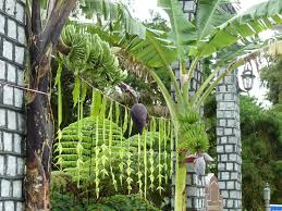 Home Parapet Designs Kerala Style by Kerala Wedding Entrance Banana And Coconut Decoration Google