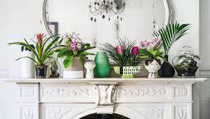 indoor plants a revolution stuff co nz