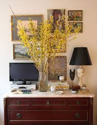 blooming forsythia branches bringing the outdoors in driven by
