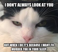 Evil Cat Meme - evil cats first world problems with erin