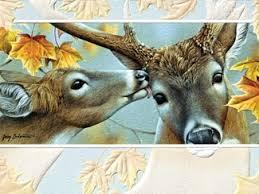pumpernickel press wildlife cards jerry gadamus greeting cards pumpernickel press