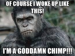 Chimp Meme - 20 funniest i woke up like this memes sayingimages com