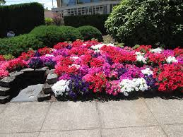 landscaping vancouver wa color landscaping vancouver wa pruning and landscaping