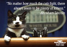 Loving One Another Quotes by Why We Love Cats And Dogs Important Pet Quotes In History