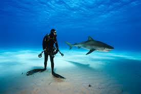 he went face to face with tiger sharks