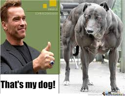 Arnold Schwarzenegger Memes - arnold schwarzenegger s pet dog by hatchisama meme center