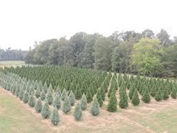 wheeler u0027s christmas tree farm