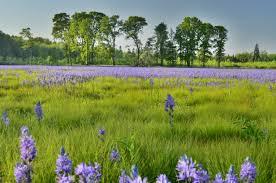 native prairie plants prairies u0026 savannas u2013 ash creek forest management