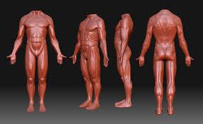 Human Anatomy Reference Human Anatomy Google Search Anatomy Pinterest Anatomy And