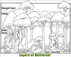 rainforest color pictures rainforest amazon coloring page