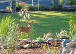 reclaim your garden how to protect your plants from deer