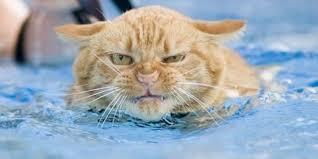 Cat Meme Maker - mad cat meme generator image memes at relatably com