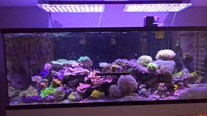 led lights for coral tanks usa reef tank with our new 108 watt or 120 led bar orphek