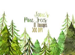 watercolor pine trees clipart illustrations creative market
