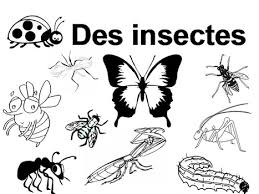 Maternelle  De 1 à 10 avec des insectes