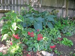 shade gardens articles gardening know how