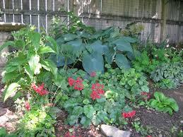 shade gardens how to garden where the sun doesn u0027t shine