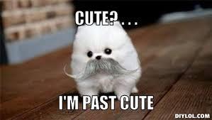 Cute Dog Memes - cute dog memes related keywords suggestions cute dog memes