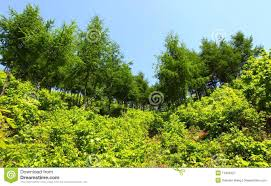 fresh plants and trees royalty free stock photography image