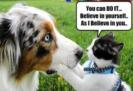 Advice Dog Memes - positive cat gives encouraging advice i has a hotdog dog