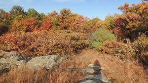plant communities of eastern massachusetts vital context for