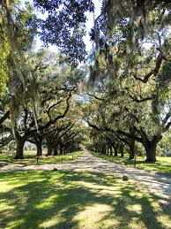 South Carolina nature activities images Charleston south carolina what to see do and eat jpg