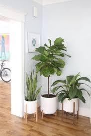 indoor trees that don t need light 10 houseplants that don t need sunlight low light houseplants low