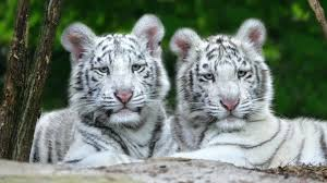 free animal wallpapers animals wallpapers gallery pc