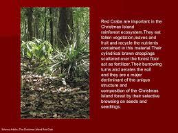 christmas island crab migration