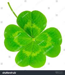st patricks day symbol lucky shamrock stock photo 597148655