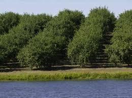 almonds tree nuts nelson irrigation