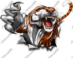 tiger slashing through skin pictures to pin on