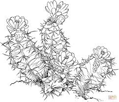baby hippo coloring pages ariocarpus fissuratus or living rock cactus coloring page free