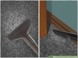 Fleas And Hardwood Floors - 4 easy ways to get rid of fleas in carpets wikihow