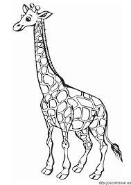 imagenes de jirafas bebes animadas para colorear dibujo de una jirafa sonriendo