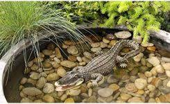 Pallet Garden Decor Alligator Garden Decor U2013 Home Design And Decorating