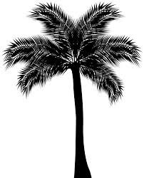 palm tree silhouette png clip art gallery yopriceville high