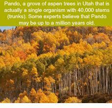 Tree Trunks Meme - 25 best memes about aspen tree aspen tree memes