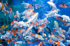 moving fish wallpaper stunning photos of fish high definition